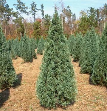 Blue Ice Christmas Tree